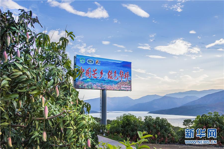 云南华坪:产业扶贫筑牢增收根基 绿水青山育出