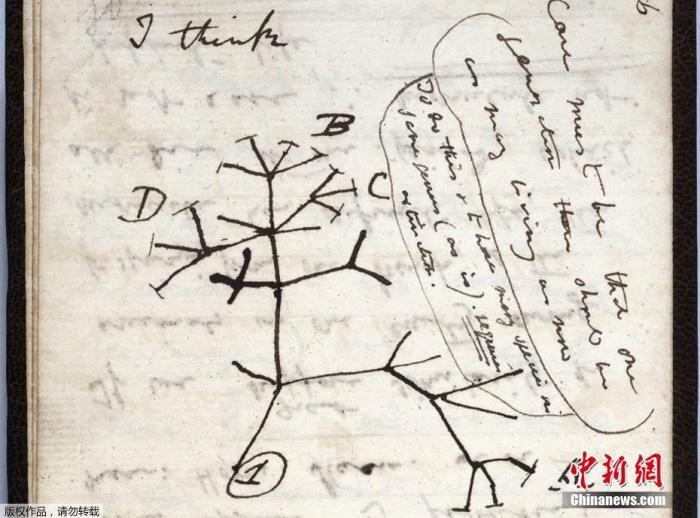 达尔文手稿遗失 剑桥大学呼吁公众帮助寻找