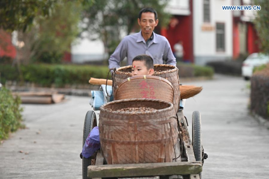 Villagers are seen in Changkou Village of Sanming, southeast China's Fujian Province, Nov. 20, 2020. For more than 20 years, Changkou Village has insisted on green development based on the resource advantages of local mountains, water and farmland. In 2019, the collective economic income of the village was 1.22 million yuan (about 185,550 U.S. dollars) and farmer's per capita disposable income reached 23,600 yuan. (Xinhua/Song Weiwei)
