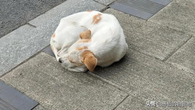 故事:一个狗妈妈的忧伤