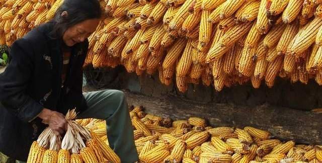 """《【无极2娱乐测速登录】中储粮玉米拍出""""天价"""",意味着什么?还能涨到多少?看完有数了》"""