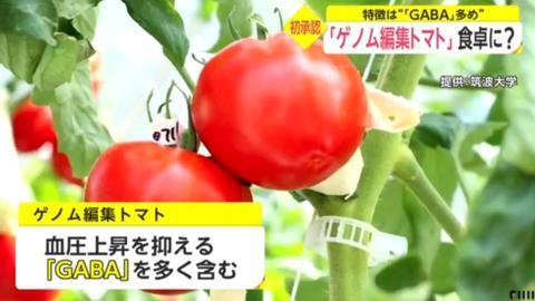 日本基因编辑番茄将上市 政府:对人无害 不用审查