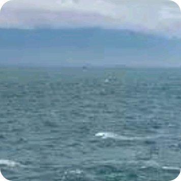 只要水体之间存在密度差异,都会形成锋面……