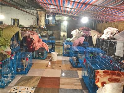 援助站的大厅也堆满狗笼子。