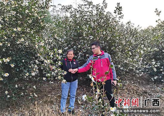 武宣县人大代表黄凤景:特色产业奔前头 脱贫致富有盼头