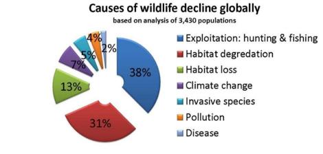 野生动物灭绝的原因分布。