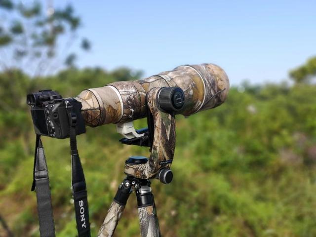 生态摄影霸王枪 索尼Alpha 9+SEL600F40GM使用心得