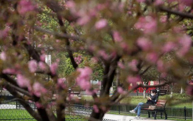 """▲3月25日,在武汉的一个街心花园,市民在长椅上休息。随着疫情防控形势好转,武汉正逐渐恢复""""生活气息""""。新华社记者 费茂华 摄"""