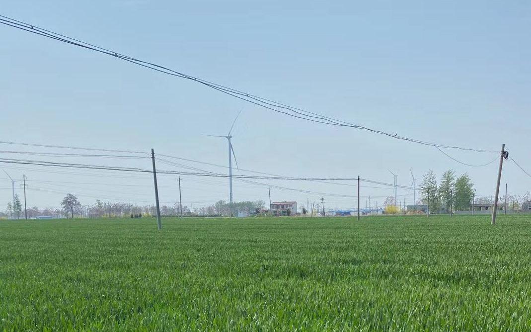 谷雨前小雨到 河南滎陽小麥預計畝產不少于1200斤圖片