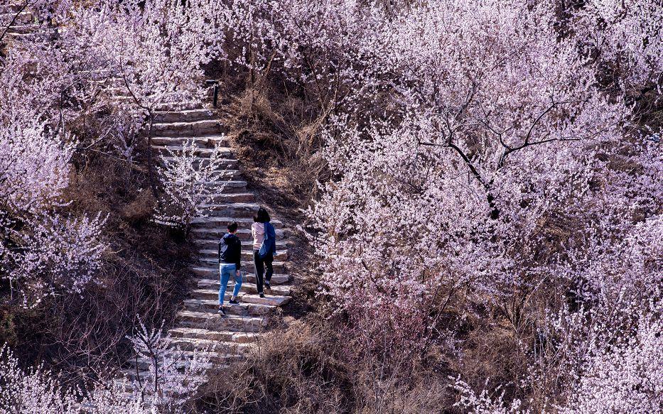 北京丰台8景区恢复开放 游客须网上实名预约购票进园