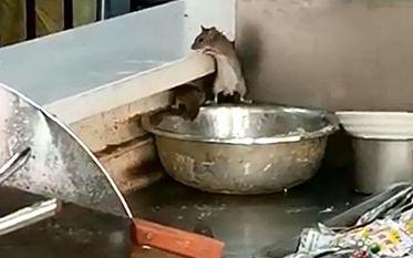 运城三甲医院餐厅现多只老鼠偷吃 涉事餐厅停业整顿