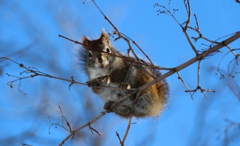 加拿大安大略省一房屋起火 松鼠被认为是元凶