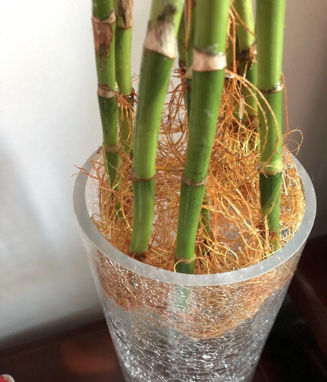 """富贵竹喜欢""""喝2种水"""",生根快、叶子绿,养好还能开""""富贵花"""""""