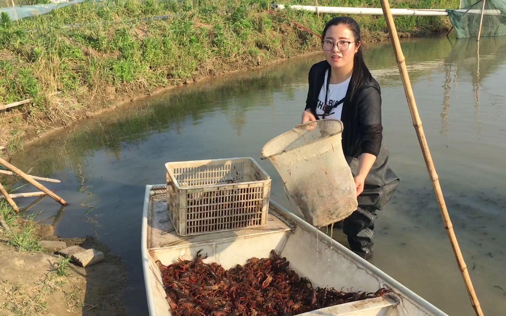 """湖北潜江""""新虾农"""":疫情后有了更多危机感与责任感"""