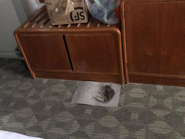 赵浩使用粘鼠板捕获的老鼠。受访者供图