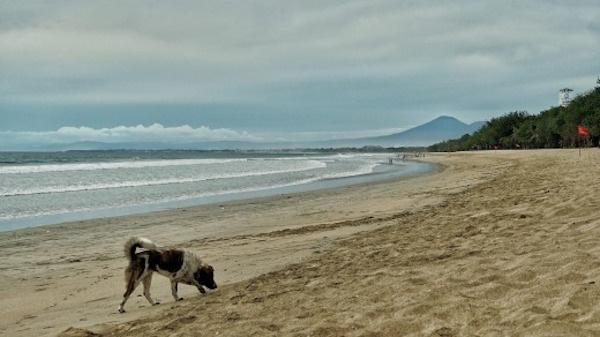 往日喧嚣的海滩空荡荡一片