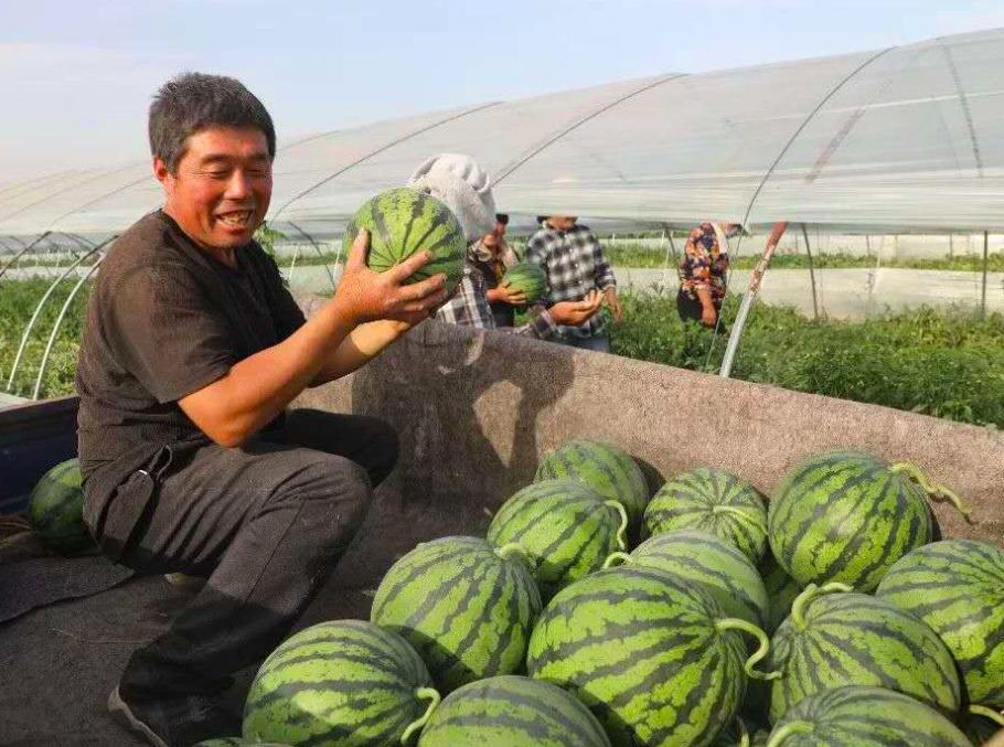 现代农业 江苏睢宁县魏集镇:西瓜吊着长 味甜颜值高