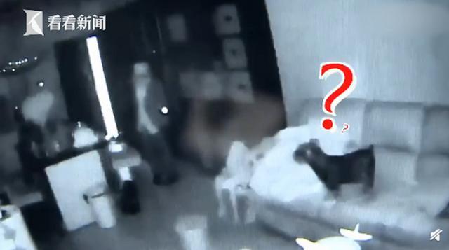 小偷入室盗窃宠物狗全程安静围观 狗主人:再养一只