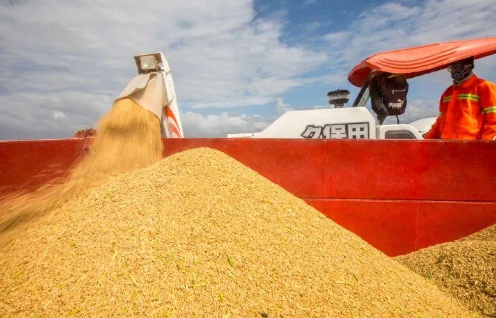法媒:新冠疫情或引发全球饥荒蔓延