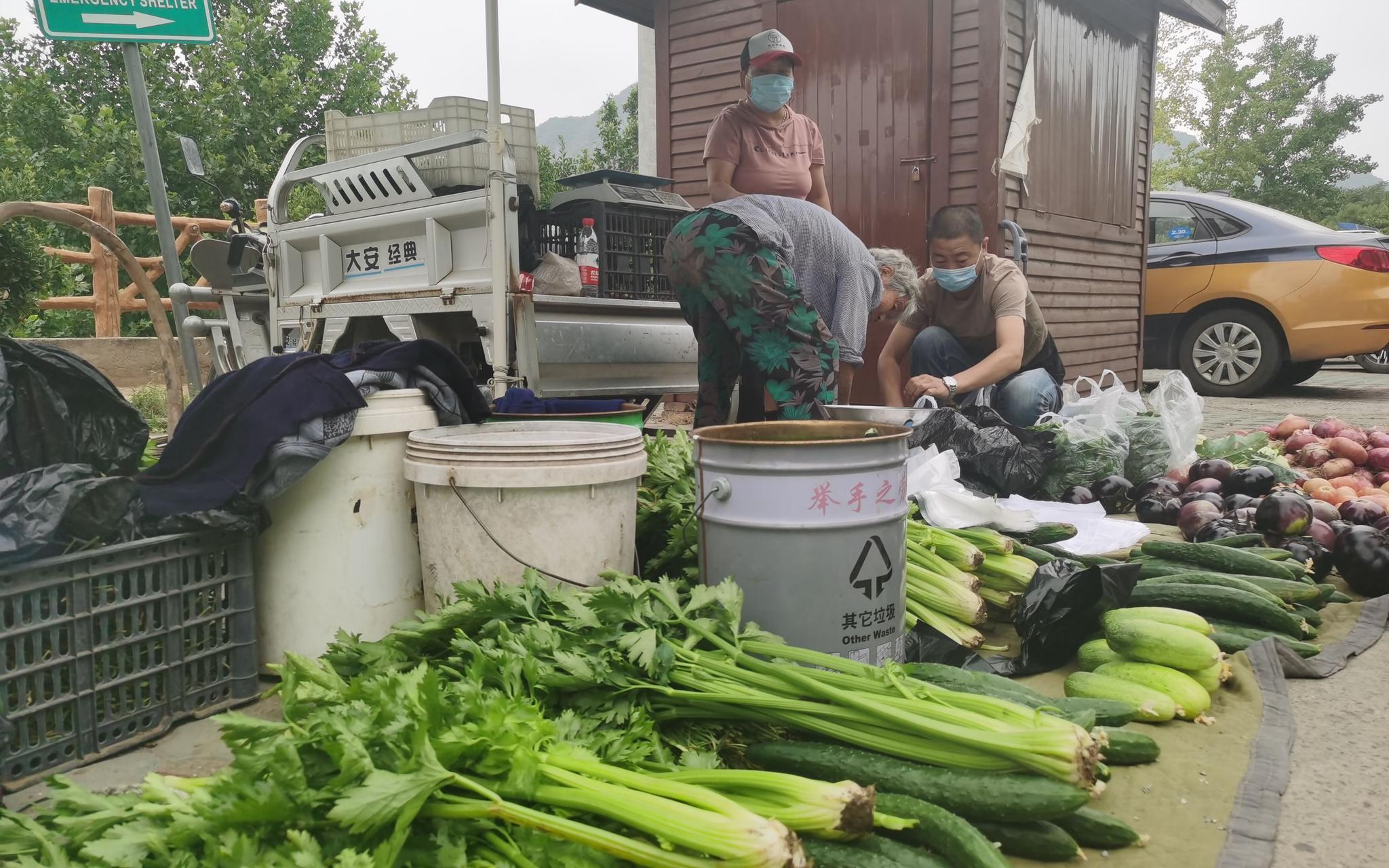 稀奇蔬菜一字摆开。新京报记者 王颖 摄