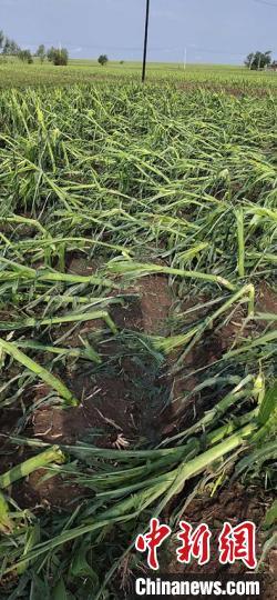 吉林舒兰遭受风雹灾害  27个村庄受灾
