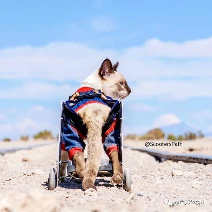 坐轮椅的她收养一只坐轮椅的喵。一人一喵,都是坐着轮椅的勇士|铲屎官_ ...