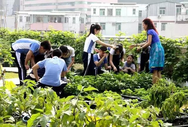 深圳福田中学劳动教育实践基地。