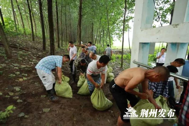 添固长湖堤防。本文图片 荆州发布