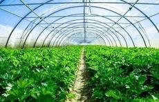 上半年公路货运数据:基建先发力!山东基建农资蔬菜三项全国第一