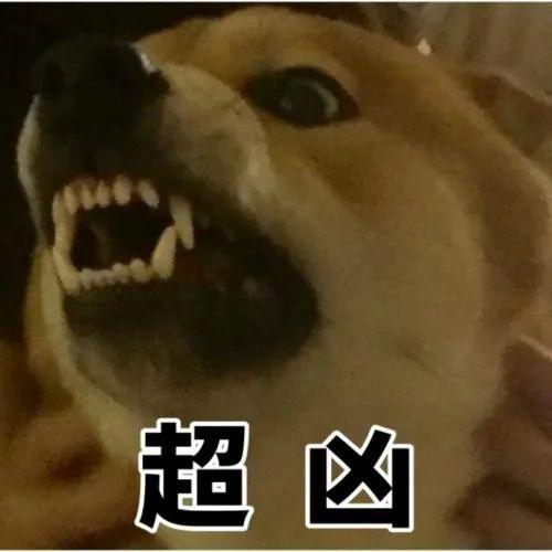 """宠物犬突然翻脸,咬伤青岛67岁大姨!主人已搬走,""""它不是第一次咬人了……"""""""