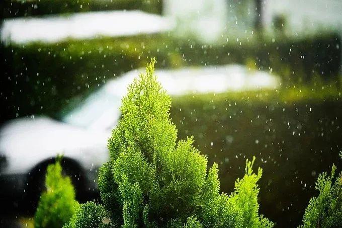 江苏今日出有梅,淮河以南梅雨量是常年的2.47倍