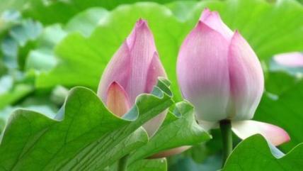 许二春  |  书法欣赏