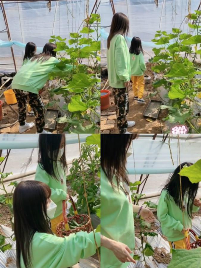 李小璐带女儿摘草莓,因甜馨的穿着受质疑?单身妈妈不容易