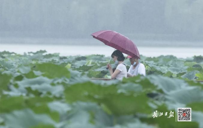 7月26日,武汉小到中雨。长江日报记者金思柳 摄