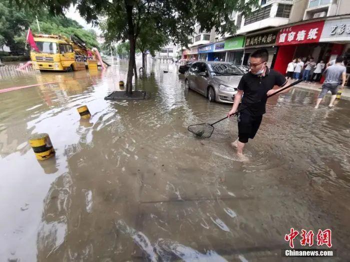 6月29日下昼,武汉市洪山区一幼区渍水点,连降暴雨幼区湖里鱼儿外逃,一些市民雨后在渍水的马路上网鱼。图片来源:人民视觉