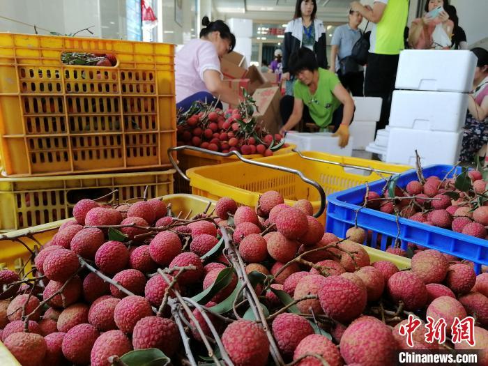 广东茂名湛江今年荔枝出口同比增长逾六成杨丽萍多大