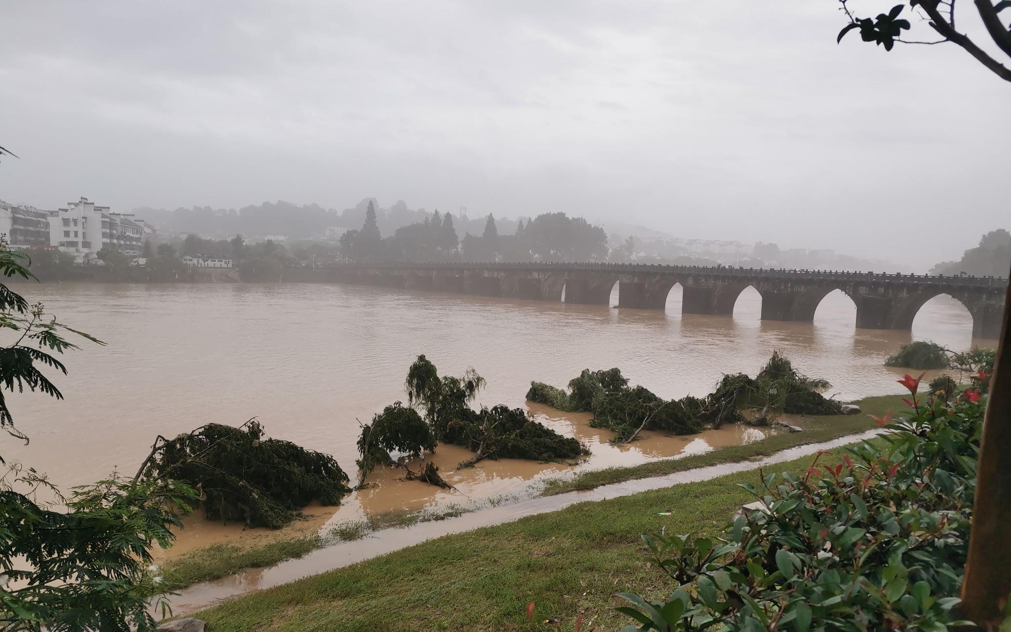 7月8日,洪水消退后的练江河道边,展现了多多倒塌的树木。受访者供图