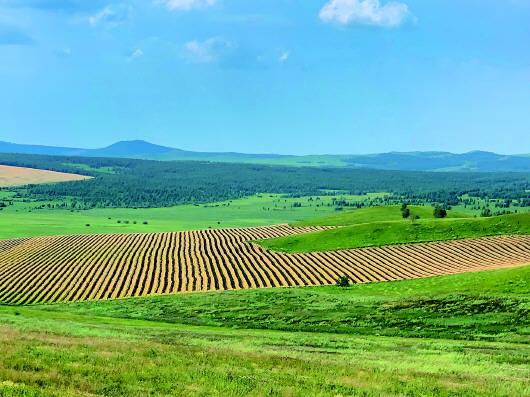 内蒙古呼伦贝尔市铲毁2万多亩将熟麦子油菜 为了完成退耕指标?