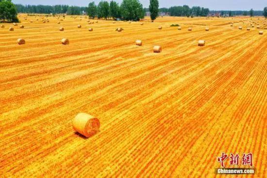 资料图:小麦收割季,麦浪滚滚遍地金黄。刘浩 陈杰 摄