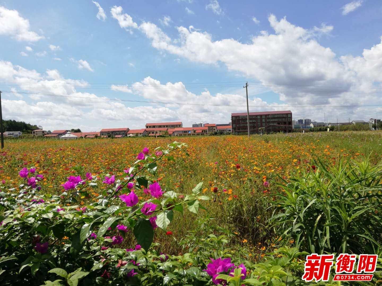 """今日""""出伏""""!8月25日衡阳预计迎接雷雨大风强对流天气"""