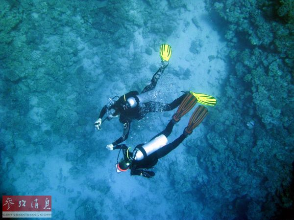 研究发现:海藻或能够提供抗新冠病毒物质