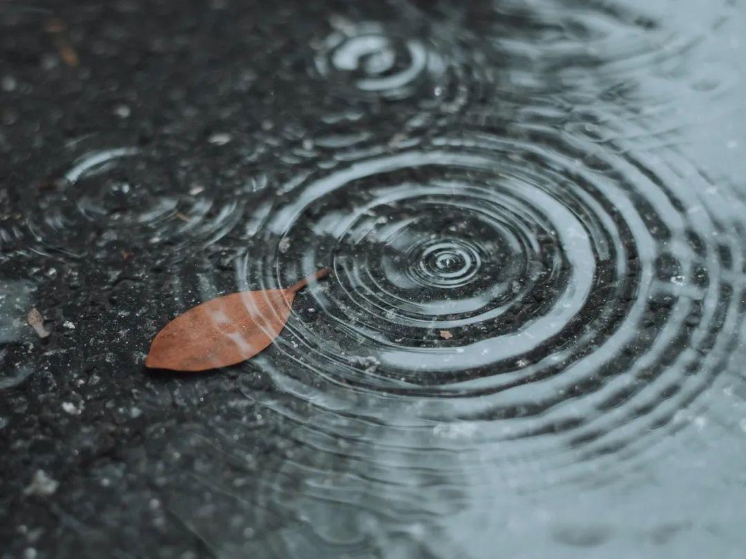 每一帧都是壁纸!雨中浙师竟美成这样…你那儿也下雨了吗?图片