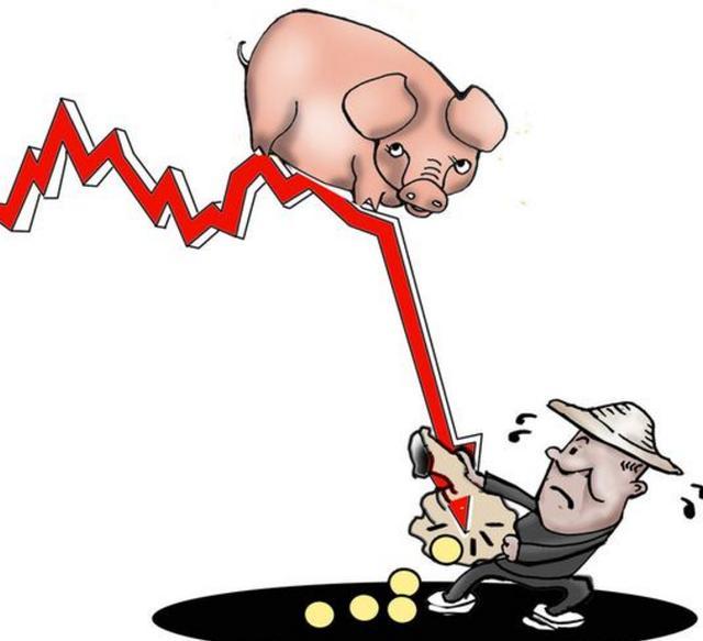 今日猪价生猪价格表最新 9月21日猪肉价格多少钱一斤 还会上涨吗?