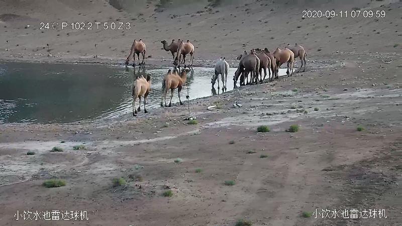 本文图均为甘肃安南坝野骆驼国家级自然保护区网站 图