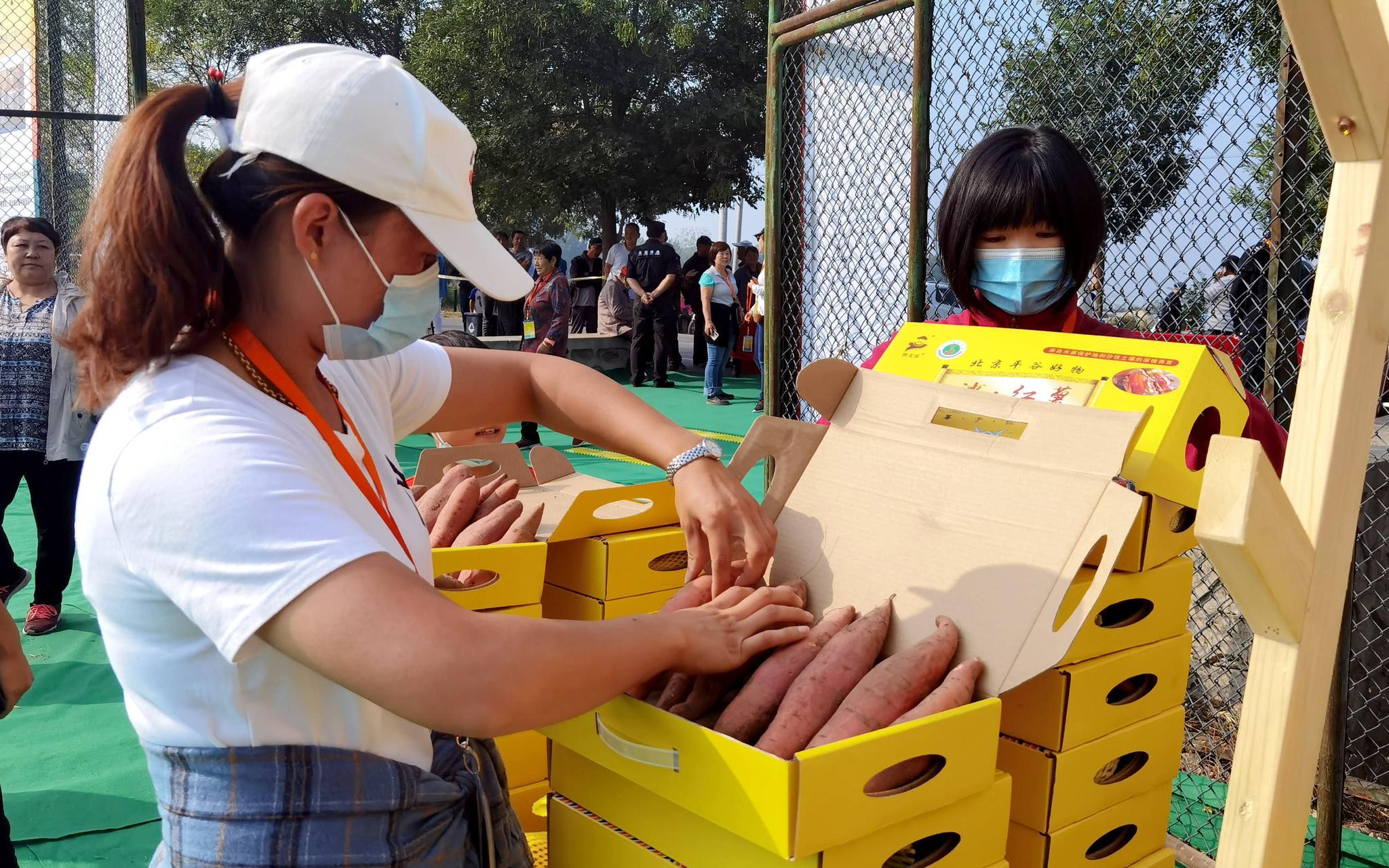 夏各庄镇第二届红薯文化节开幕 老手艺人现场展示传统技艺