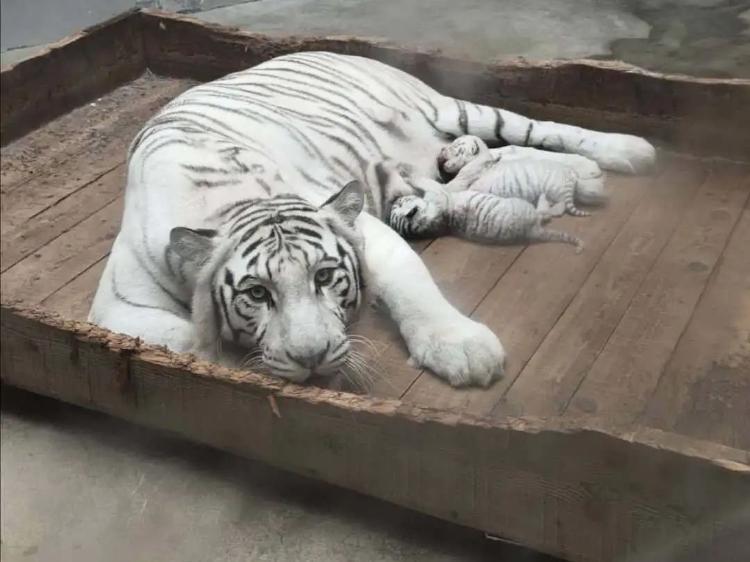青岛市动物园:宝贝来啦!盘点青动的新生小成员们
