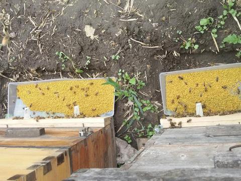 刘德成自杀后:留在云南的养蜂人,每天给蜜蜂喂白糖,撑不住了!