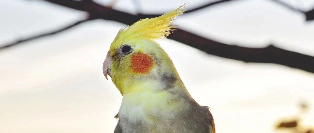 我烫头还浓妆艳抹,但我确实是个好鸟