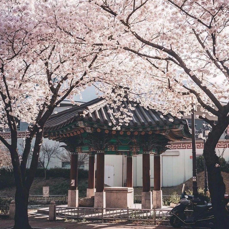 壁纸 | 韩国摄影师镜头记录的春日暖阳