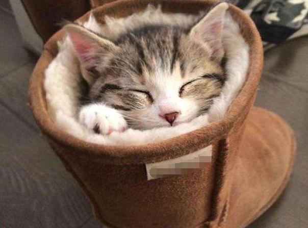 天气太冷,小奶猫躲到主人的雪地靴里睡觉,小模样太萌了